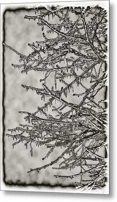 Jack Frost Metal Print by Bill Cannon