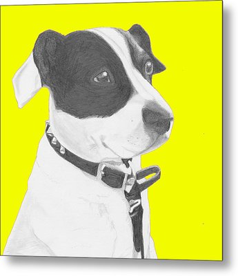 Jack Russell Crossbreed In Yellow Headshot Metal Print by David Smith