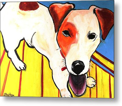 Metal Print featuring the painting Jack Russell Terrior- Peanut by Laura  Grisham