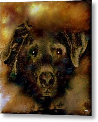 Jade-my Special Lab Metal Print by Sherri's Of Palm Springs