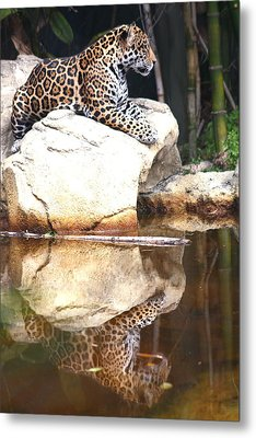 Jaguar At Rest Metal Print by Diane Merkle