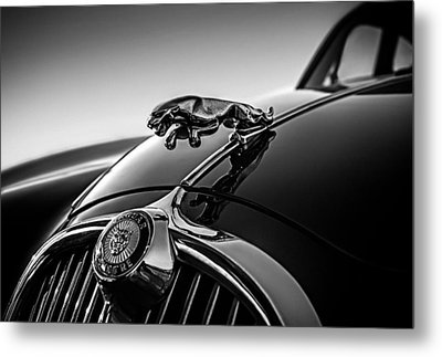 Jaguar Mascot Metal Print by Douglas Pittman