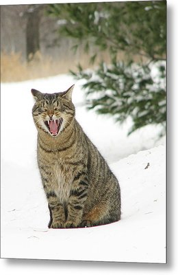 Jake In The Snow Metal Print by Laurie With