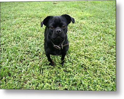 Jake Metal Print by Laurie Perry
