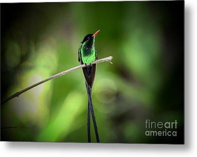 Jamaican Hummingbird Metal Print