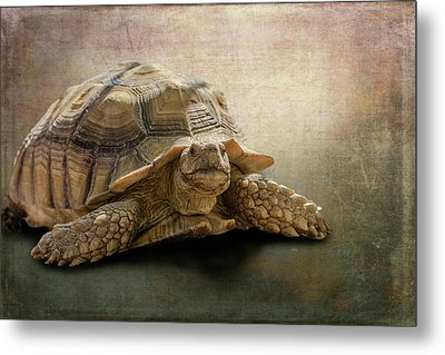 Jamal The Tortoise Metal Print by Angela A Stanton