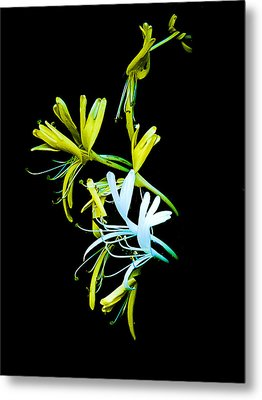 Metal Print featuring the photograph Japanese Honeysuckle by Bill Barber