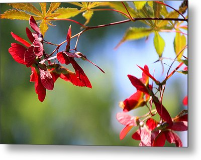 Japanese Maple 1782 Metal Print by Carolyn Stagger Cokley
