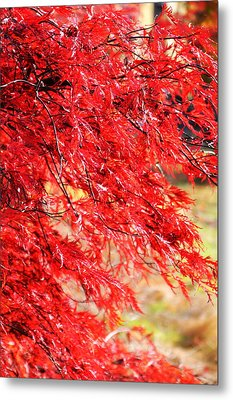 Japanese Maple 9 Metal Print by Tanya  Searcy