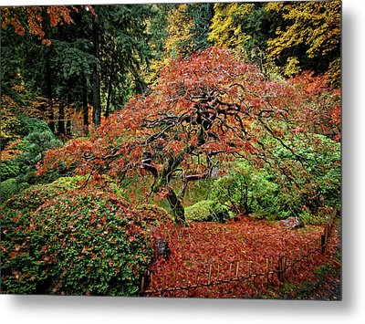 Metal Print featuring the photograph Japanese Maple At The Japanese Gardens Portland by Thom Zehrfeld