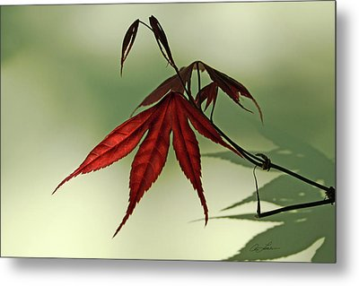 Japanese Maple Leaf Metal Print by Ann Lauwers