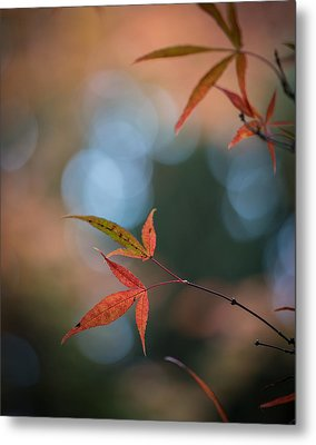 Japanese Maple Leaves Meditation Metal Print by Mike Reid