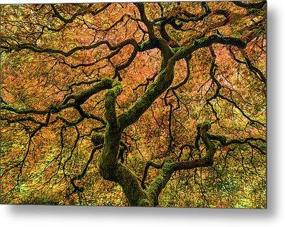 Japanese Maple Tree Metal Print by Larry Marshall