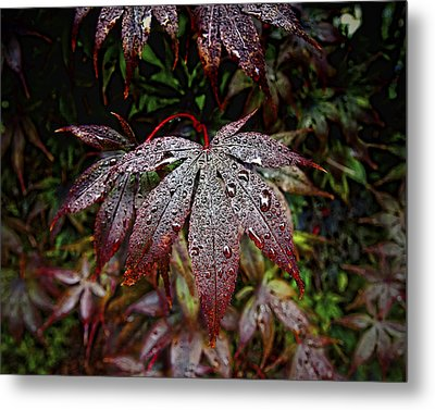 Japanese Maples In The Rain Metal Print by Michael Putnam