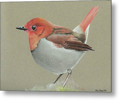 Japanese Robin Metal Print by Gary Stamp