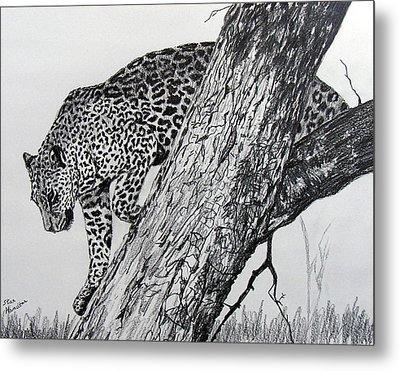 Jaquar In Tree Metal Print by Stan Hamilton