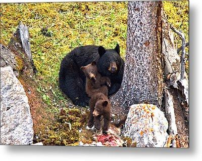 Jasper Black Bear Dinner Metal Print by Adam Jewell