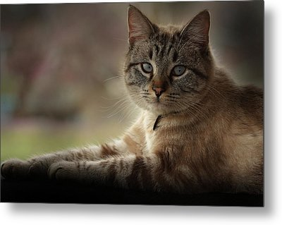 Metal Print featuring the photograph Jaspurr by Kim Henderson
