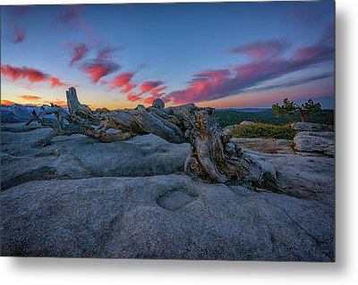 Metal Print featuring the photograph Jeffrey Pine Dawn by Rick Berk