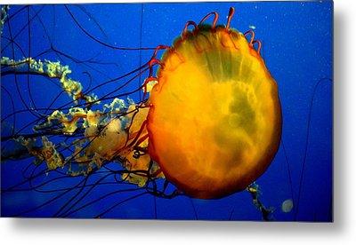 Jellyfish Metal Print by David Gilbert