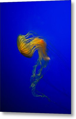 Jellyfish From The Deep Blue Metal Print by Nila Newsom