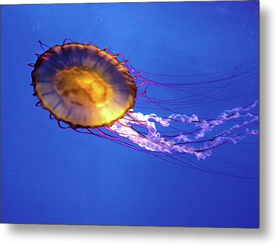 Jellyfish I Metal Print
