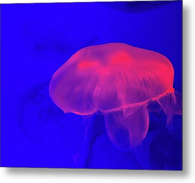 Jellyfish Metal Print by Martin Newman