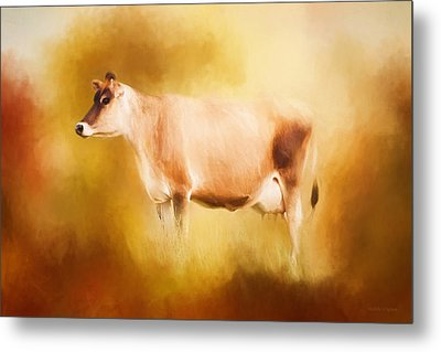 Jersey Cow In Field Metal Print by Michelle Wrighton