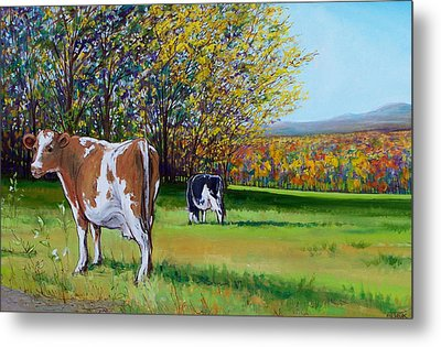 Jerseys And Judevine  Metal Print by Vermont Artworks
