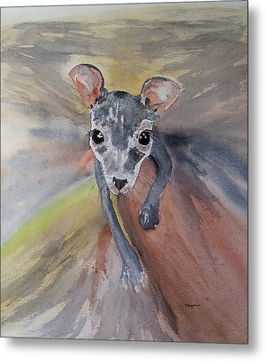 Joey In Mums Pouch Metal Print