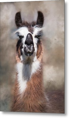 Metal Print featuring the photograph Jolly Llama by Robin-Lee Vieira