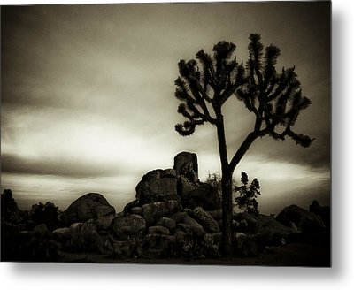 Metal Print featuring the photograph Joshua Morning by Tom Vaughan