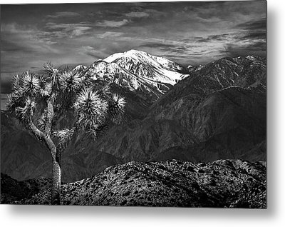 Metal Print featuring the photograph Joshua Tree At Keys View In Black And White by Randall Nyhof