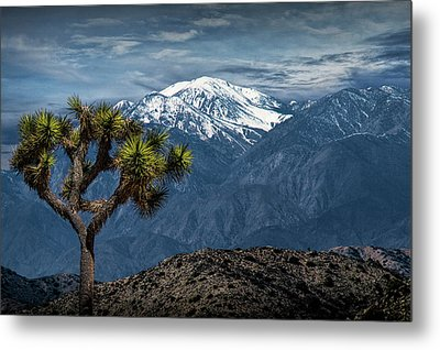 Metal Print featuring the photograph Joshua Tree At Keys View In Joshua Park National Park by Randall Nyhof