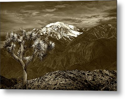 Metal Print featuring the photograph Joshua Tree At Keys View In Sepia Tone by Randall Nyhof