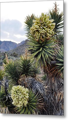 Joshua Tree Bloom Rainbow Mountain Metal Print by Kyle Hanson