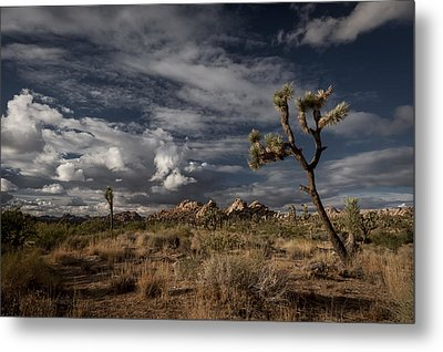 Joshua Tree Fantasy Metal Print