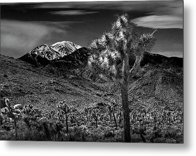 Metal Print featuring the photograph Joshua Tree In Black And White In Joshua Park National Park With The Little San Bernardino Mountains by Randall Nyhof