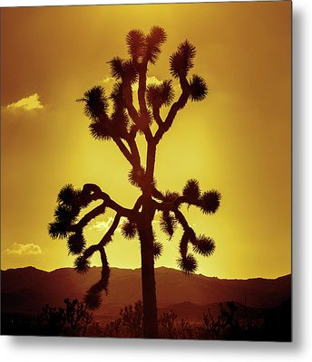 Metal Print featuring the photograph Joshua Tree by Stephen Stookey