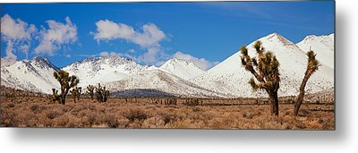 Joshua Trees In The Sierra Nevada Metal Print by Panoramic Images