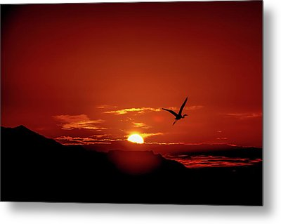 Journey Home Metal Print by Mark Dunton