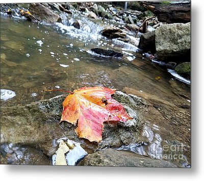 Journey Of A Leaf Metal Print by Scott D Van Osdol