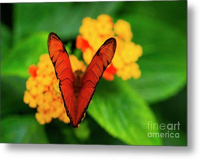 Metal Print featuring the photograph Julia Butterfly, Dryas Iulia by Ralph A Ledergerber-Photography