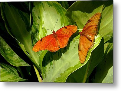 Metal Print featuring the photograph Julia Butterfly Pair by Rosalie Scanlon