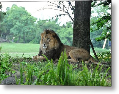 Metal Print featuring the photograph Jungle King by John Black