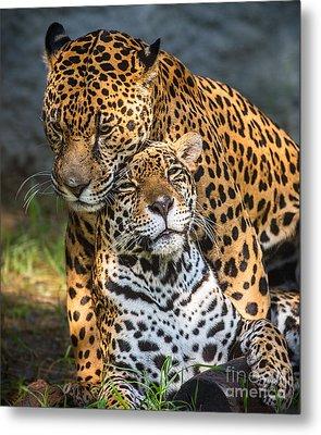 Jungle Love Metal Print