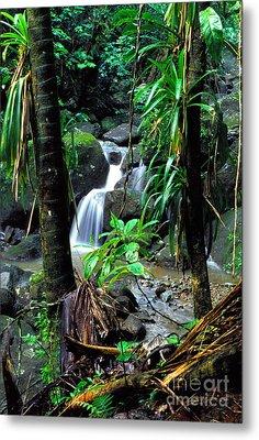 Jungle Waterfall Metal Print by Thomas R Fletcher