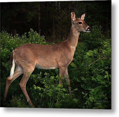 Just A Deer Metal Print by Bill Stephens