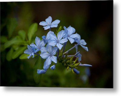 Metal Print featuring the photograph Just A Touch Of Blue by Monte Stevens