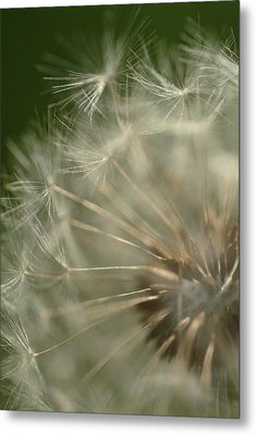 Just A Weed Metal Print by Michael McGowan